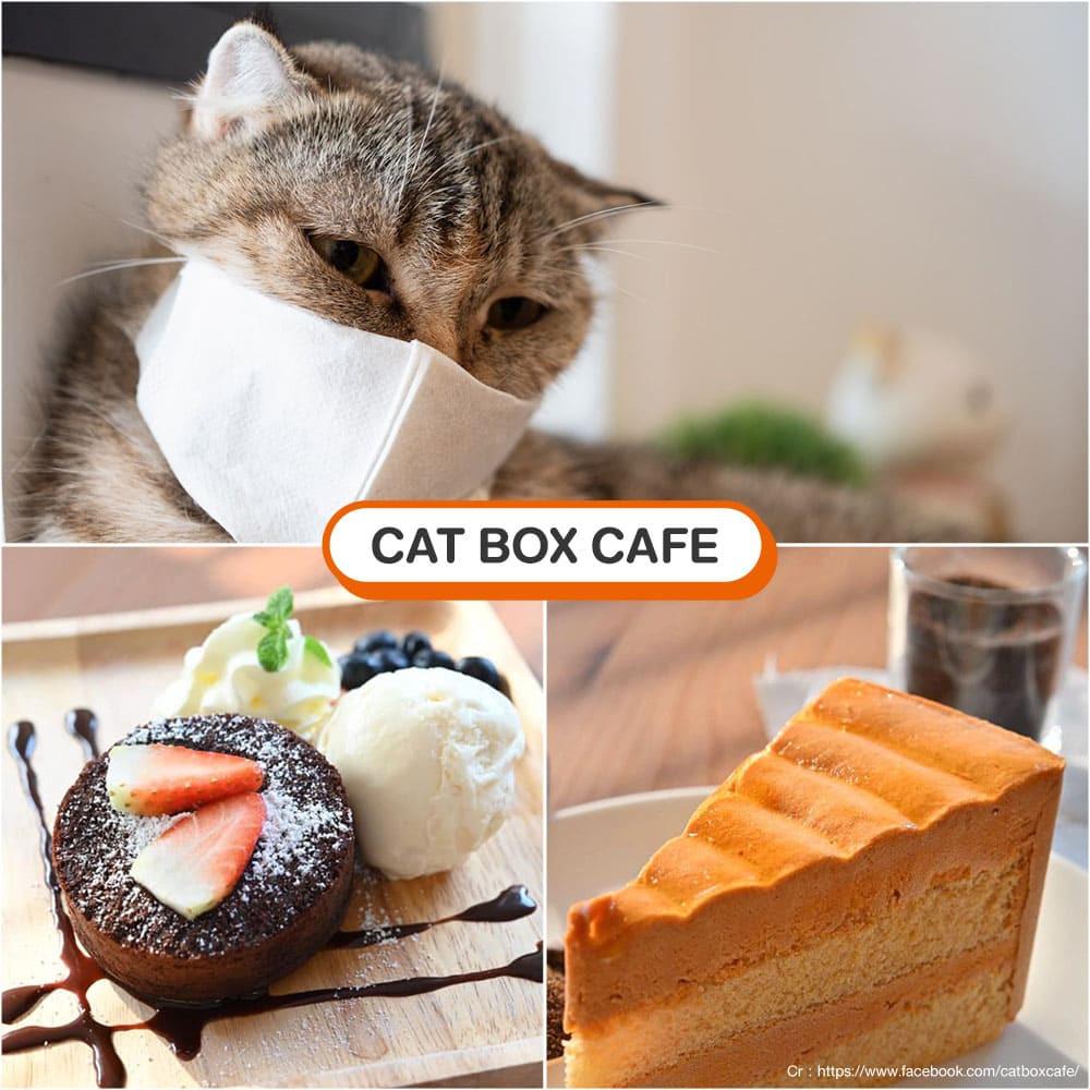 คาเฟ่แมว Cat Box Cafe