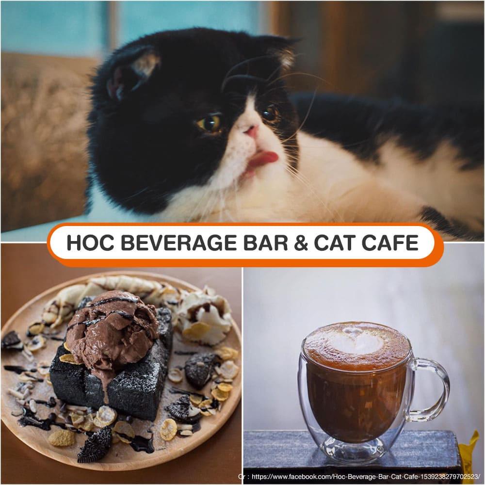 คาเฟ่แมว Hoc Beverage Bar & Cat Cafe