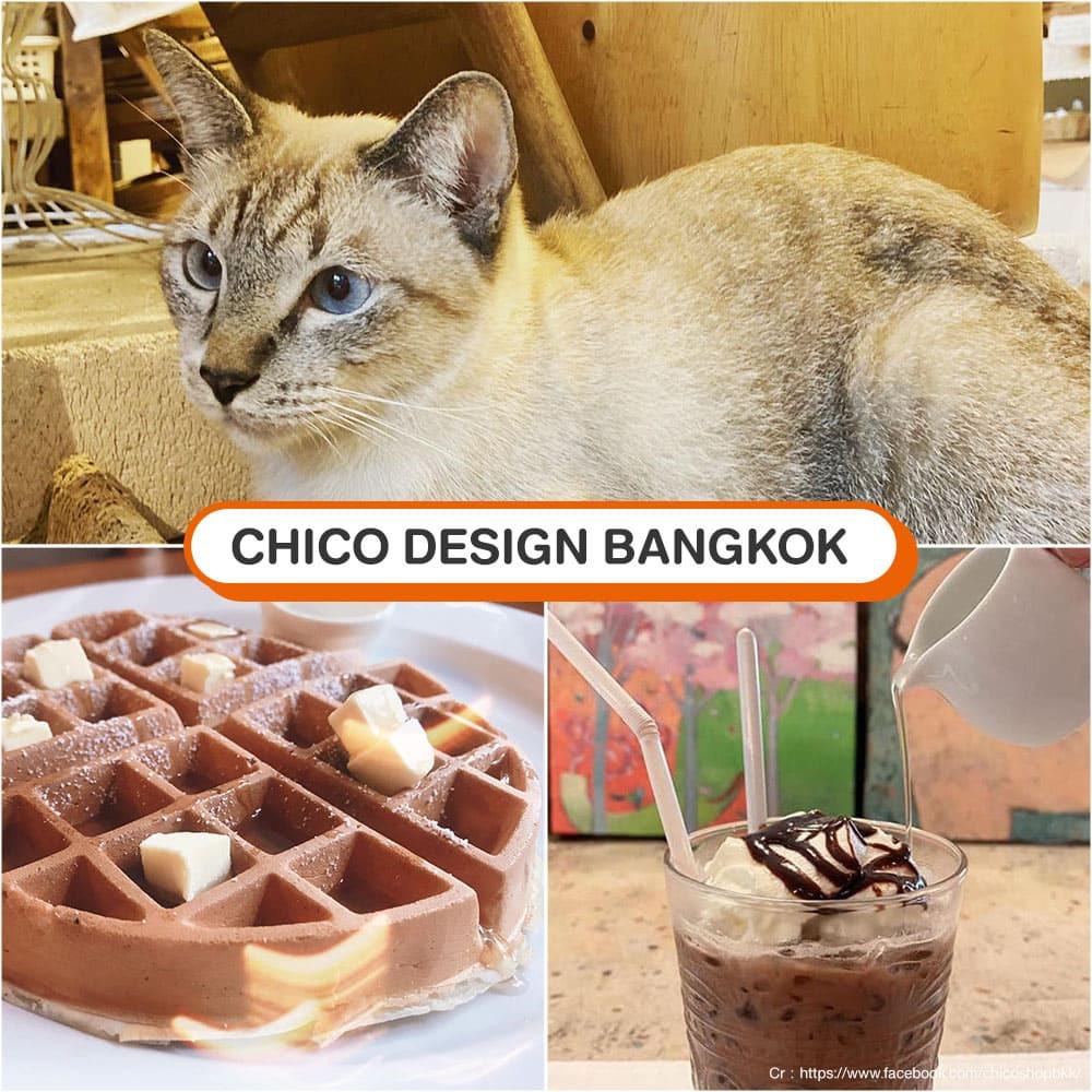 คาเฟ่แมว Chico Design Bangkok