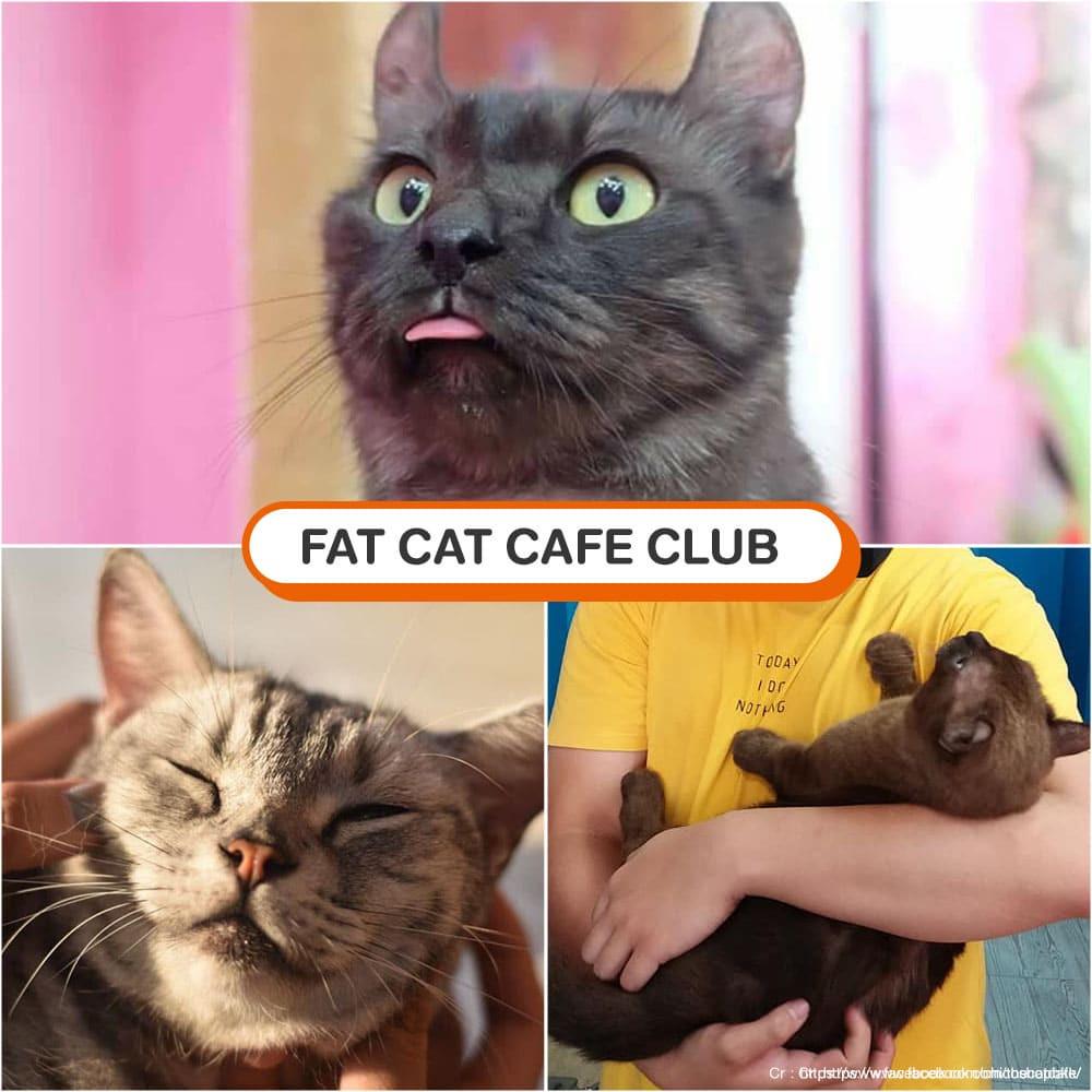 คาเฟ่แมว Fat Cat Cafe Club