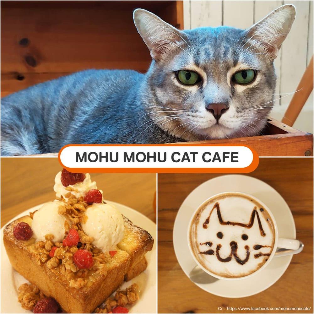 คาเฟ่แมว Mohu Mohu Cat Cafe