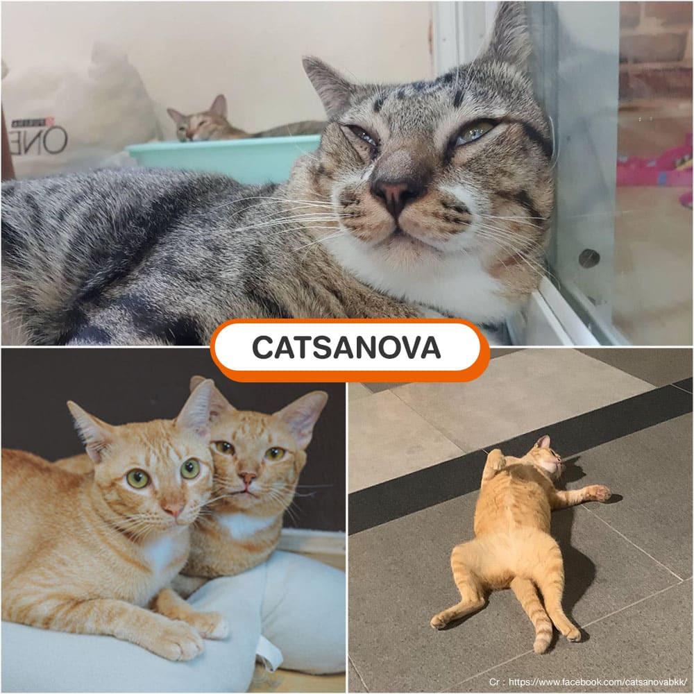 คาเฟ่แมว Catsanova
