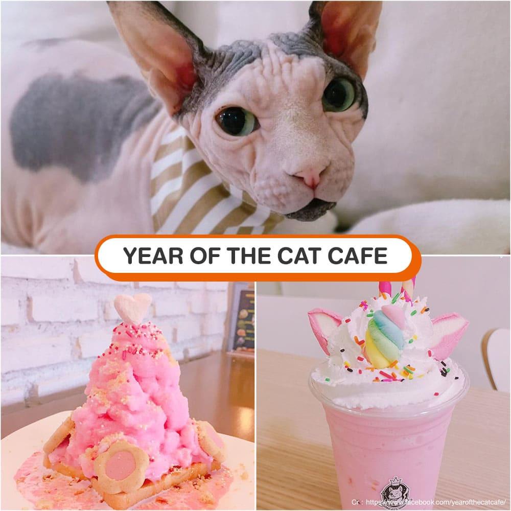 คาเฟ่แมว Year of The Cat Cafe