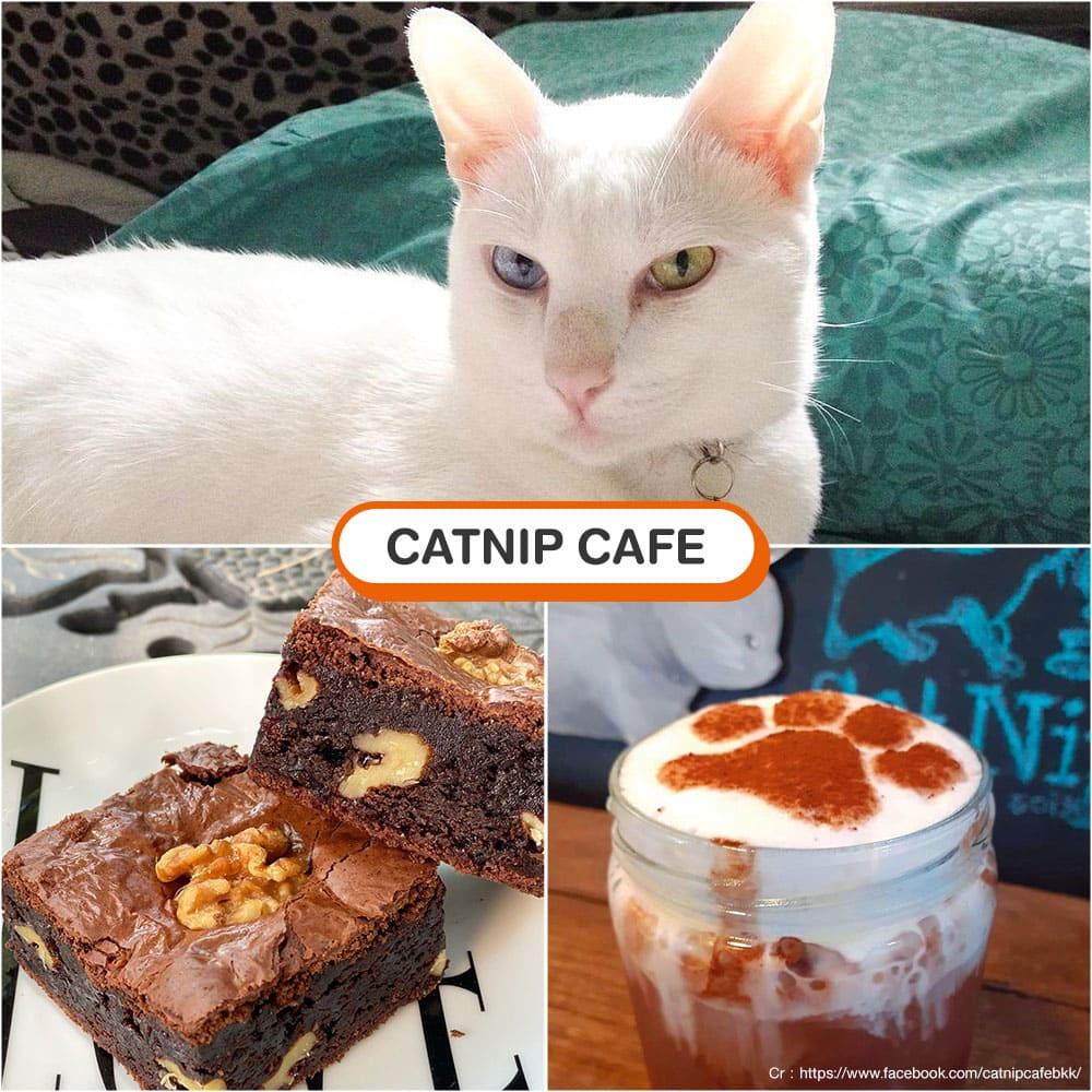 คาเฟ่แมว CatNip Cafe