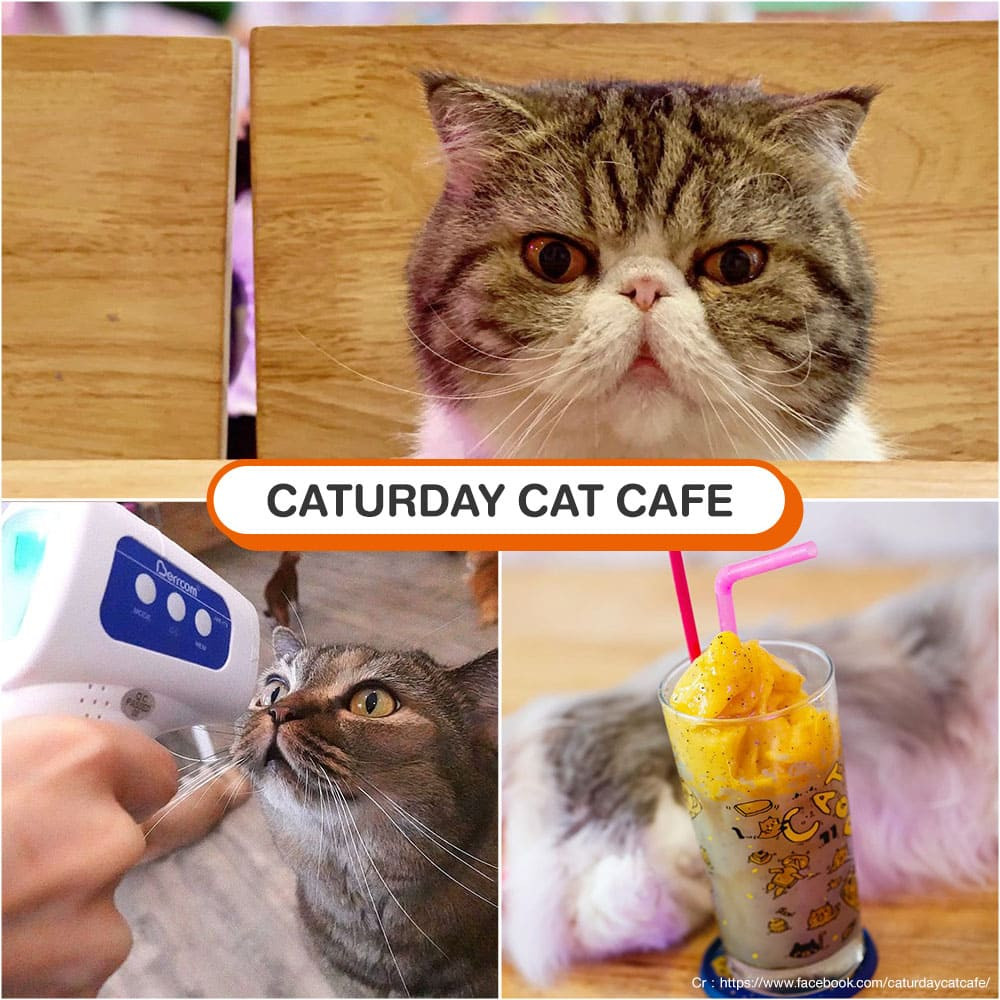 คาเฟ่แมว Caturday Cat Cafe