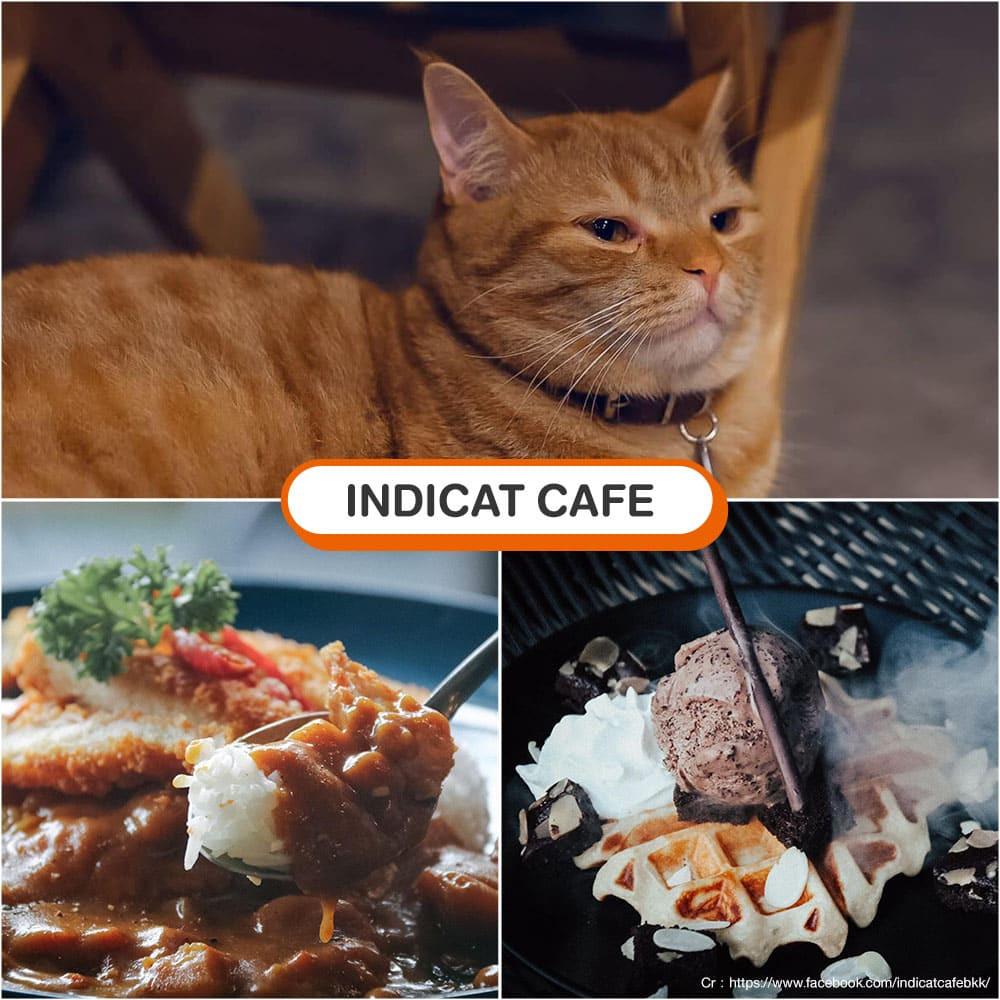 คาเฟ่แมว Indicat Cafe